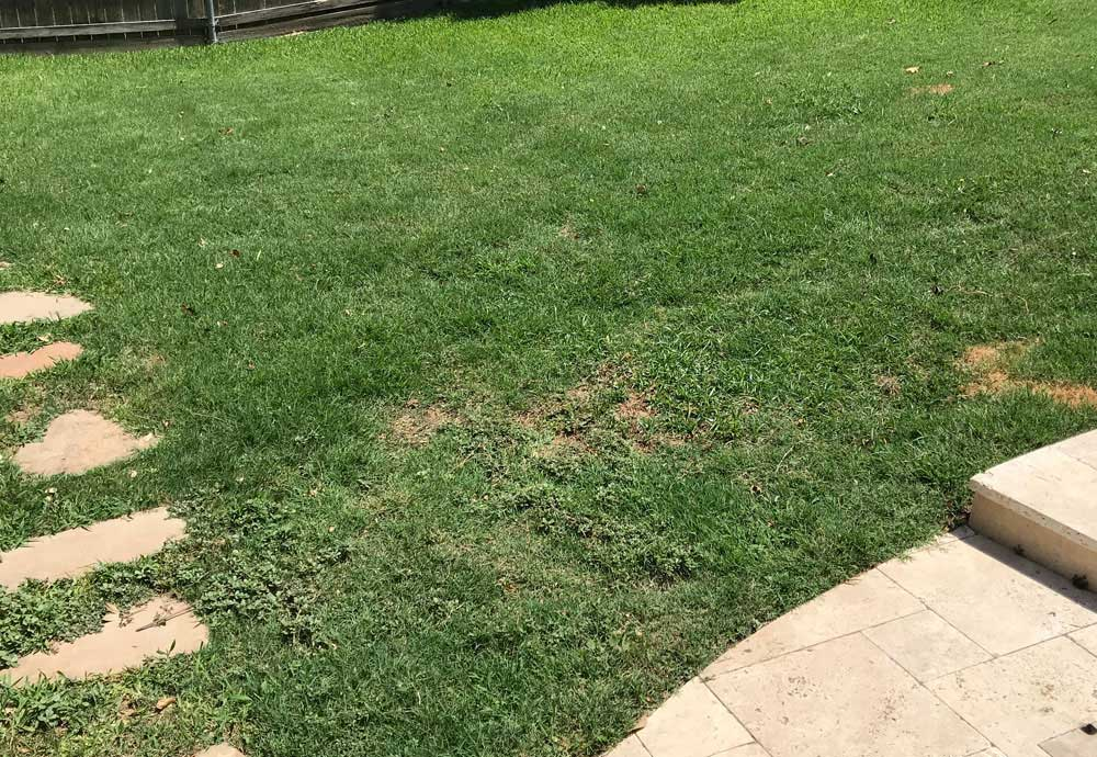 jun 18 2019 lawnburn