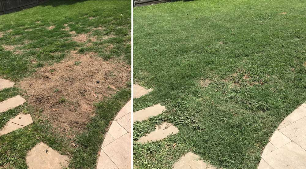 lawnburn before after