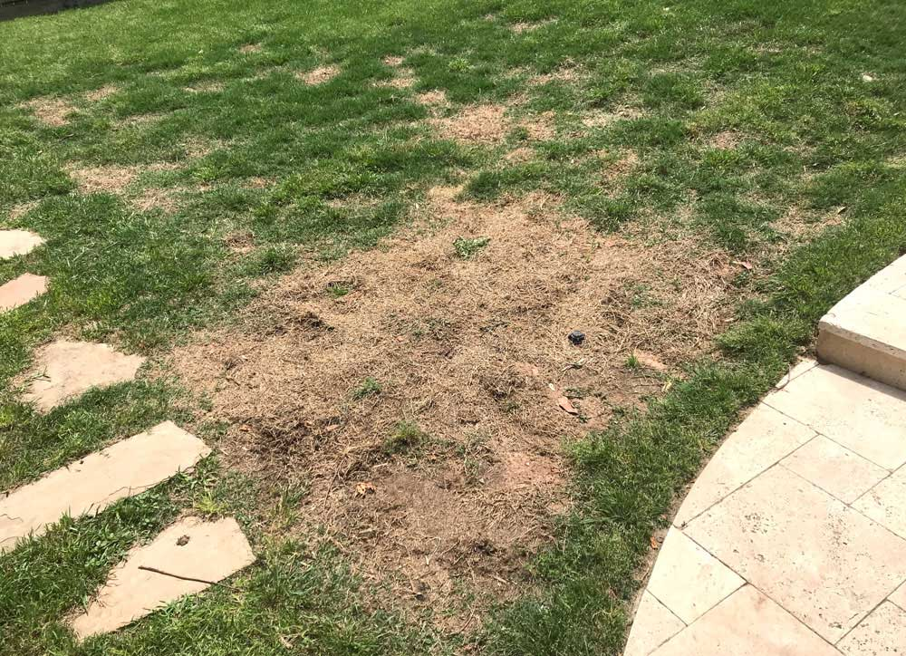 may 6 2019 lawnburn